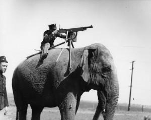 HTTPS sur un blog, c'est comme un éléphant-mitrailleuse. Ça ne sert pas a grand chose mais c'est cool!